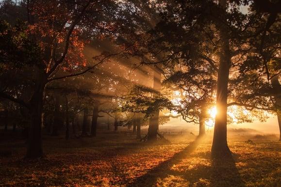 green leaf trees during sunrise